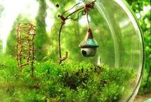 Mini gardens / terrariums