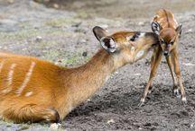 Animal Babies - Precious