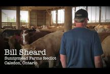 Canadian Beef Story