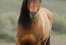 HorsePowers / by Jignesh Desai