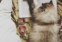 Dream cats / My dream cat spisies - Birma & Ragdoll