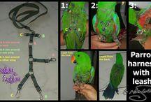 Pet wear & accessories