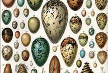 Eggs Nests & Bird Houses / .