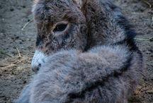 Kleine Esel / Eine Sammlung der kleinsten und süßesten Esel.