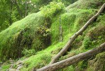 Natur / Herrliche Bilder von der schönen Natur