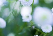 Skuggrabatt / Växtidéer till baksidan