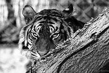 Zoológico de Barcelona / Animales