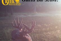 Can you guess the Score? / Can you guess the score of these Missouri monster bucks? Oak Creek Whitetail Ranch has some of the largest whitetail bucks in the country.