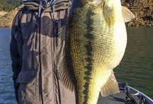 Bass Fishing Pics