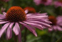 Flowers / by Nancy Schober