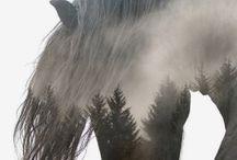 Mysterious wonderful horse