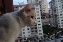 My lovely catss!!