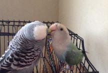 No Feather Left Behind / Adventures in Bird Rescue