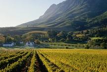 Wijn / De prachtige Zuid-Afrikaanse wijnlanden & wijnen