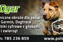 Dogtra dla psa / Najlepsze produkty dogtra