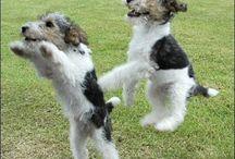 Malí psi