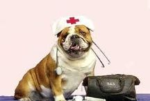 how to protect your pets from fleas / Pet Health: The Shocking Truth, The Disgusting Lies.... ExposedATTENTION: If You Have A Pet Suffering From A Serious Disease Such As Cancer, Liver Disease, Renal Failure, Congestive Heart Failure, Or Any Other Disease You Must Read This Immediately! http://protectyourpetsfromflea.blogspot.jp
