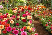 Gardens to adore! / Flowers, plants, and gardens, oh my!