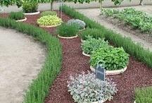 Giardino / Giardino interno