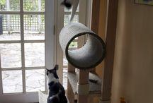 cat stuff / by Heather Dry