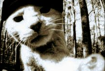 Pod Cat Music Reporter / A Nice Cat with reporter talent for archive online IDM electronic music || Online Music Streaming Site ||
