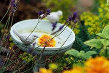 Gardening is good for the Soul <3 / by Deborah Harvey