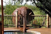 I ♥ Elephants / by Don Puryear