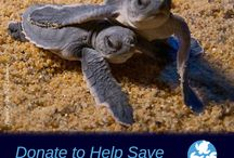 Billion Baby Turtles Fundraising Campaign / Help us save 5,000 turtle hatchlings!