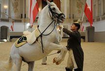 Lipizzaner Horses / White beauties
