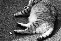 des chats pas comme les autres