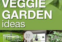 Delicious Veggie Gardening / Get the most flavors out of your Veggie Gardening efforts, secret tips to get the most out of your Veggie Gardens. Follow us!