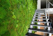 Grünes # Pflanzen