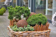 Plants creations