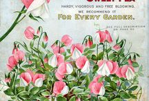 Vintage Seed Packets & Catalogs / by Debbie Abrames