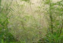 spiderwebs / by Janice Reeves