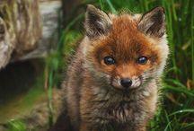 Fuchse