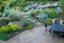 Beautiful Xeriscape / Here are some great looking xeriscape ideas that can help cut back on outdoor irrigation costs.