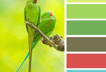 kleurtjes kiezen