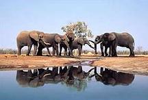 Botswana / Tanker om tur til Botswana