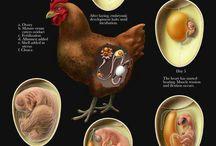 Fresh Eggs / Everything about fresh eggs @hopeyandcompany Asheville North Carolina