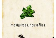 mosquito repellants