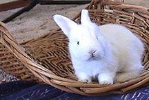 Angora Rabbits / by Karen Krueger