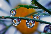 Rain Drops Pictures / Natural rain drop from after rain stops.... / by Travel Arrows