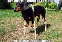 :-) / funny stuff