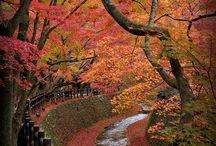 Autumn in Kyoto !