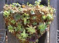 Flower/Succulent hangers / by Raquel Fletcher Hays