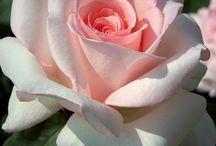 Цветы , природа