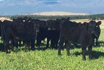 PG | Moby Forage Barley