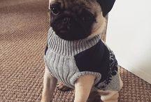 pug winter