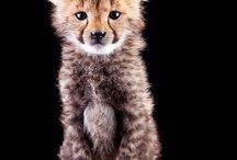 Animals / by Meggie Kecskes